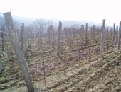 vinograd5.jpg